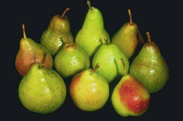 choosing-pears