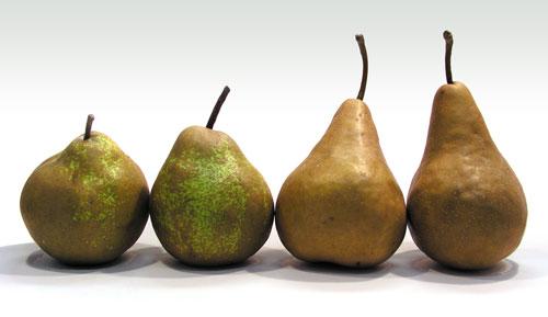 pear-varieties