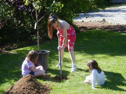 planting-pear